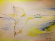 Kachna v letu
